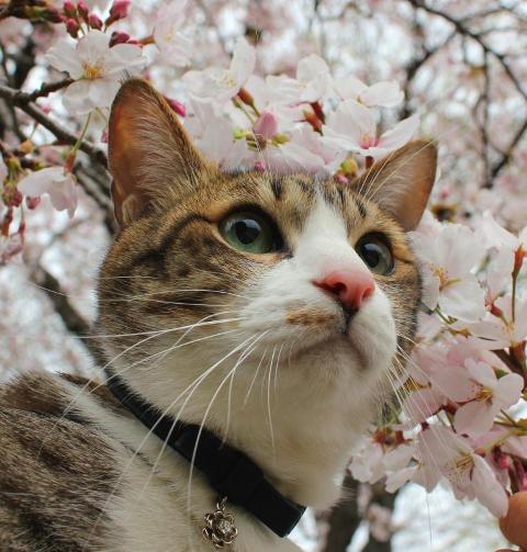 お誕生日猫 ぽー10歳編。_a0143140_9471892.jpg