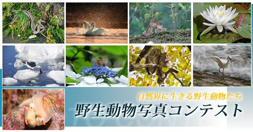 平成24年度 野生動物写真コンテスト 作品募集_b0177163_10385739.jpg