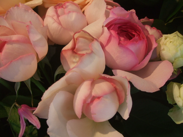 オークリーフ(青木農園さんの紫陽花)_f0049672_14465561.jpg