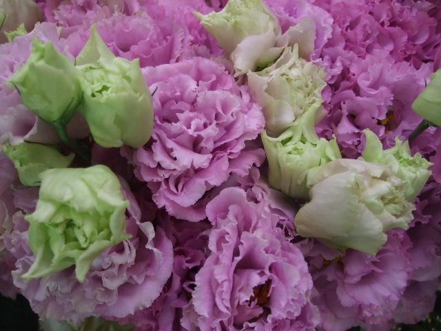 オークリーフ(青木農園さんの紫陽花)_f0049672_14474223.jpg