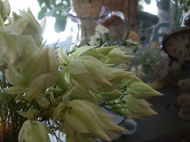 オークリーフ(青木農園さんの紫陽花)_f0049672_14475767.jpg