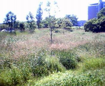 サクシュコトニ川緑地_f0078286_17354893.jpg