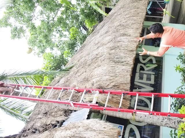 ヤシの木1本 実が2つ_e0220089_18591294.jpg