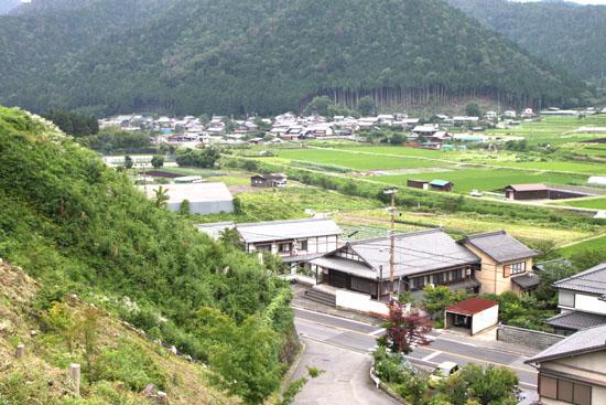 大原の里 シソ畑_e0048413_1814076.jpg