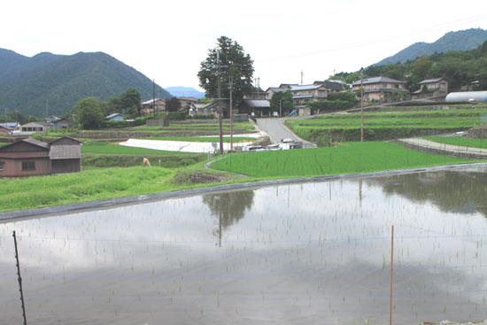 大原の里 シソ畑_e0048413_1815992.jpg