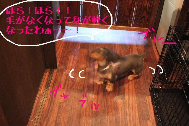 こんばんわぁ~~!!_b0130018_21141041.jpg