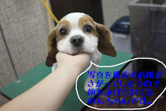 こんばんわぁ~~!!_b0130018_21161533.jpg