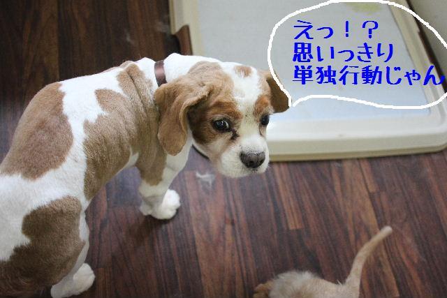 こんばんわぁ~~!!_b0130018_21171421.jpg