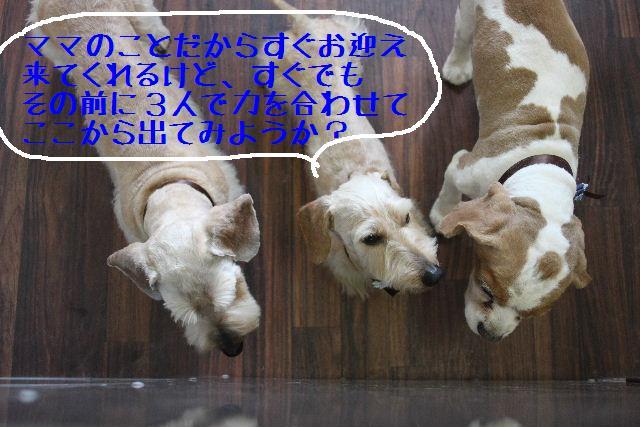 こんばんわぁ~~!!_b0130018_2117157.jpg