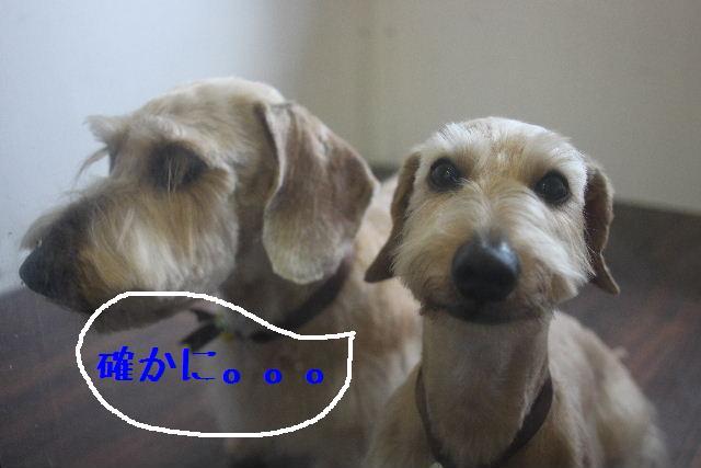 こんばんわぁ~~!!_b0130018_21172099.jpg