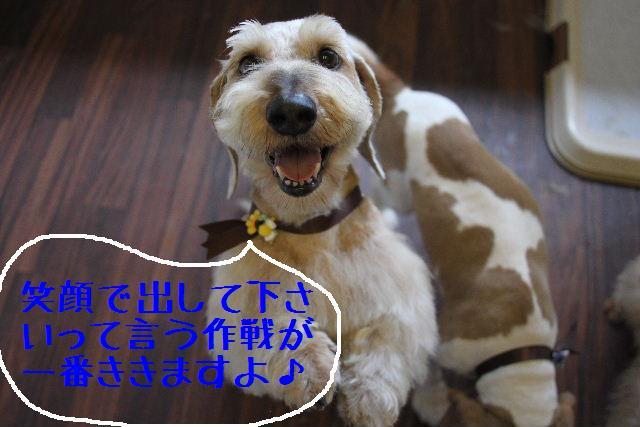 こんばんわぁ~~!!_b0130018_21172650.jpg