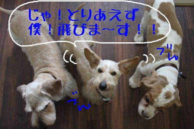 こんばんわぁ~~!!_b0130018_2117581.jpg