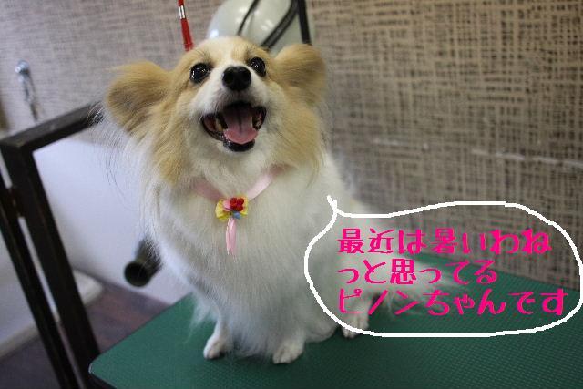 こんばんわぁ~~!!_b0130018_21195134.jpg