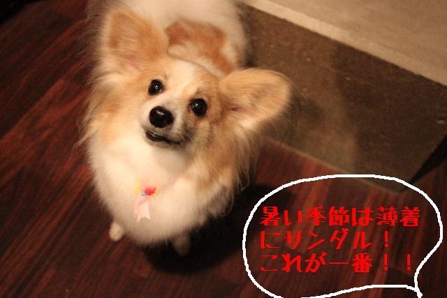 こんばんわぁ~~!!_b0130018_2119572.jpg