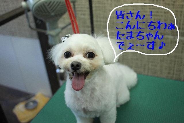 こんばんわぁ~~!!_b0130018_2122183.jpg