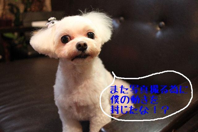 こんばんわぁ~~!!_b0130018_21222576.jpg