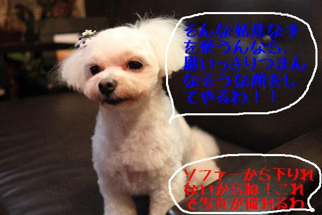 こんばんわぁ~~!!_b0130018_2122322.jpg
