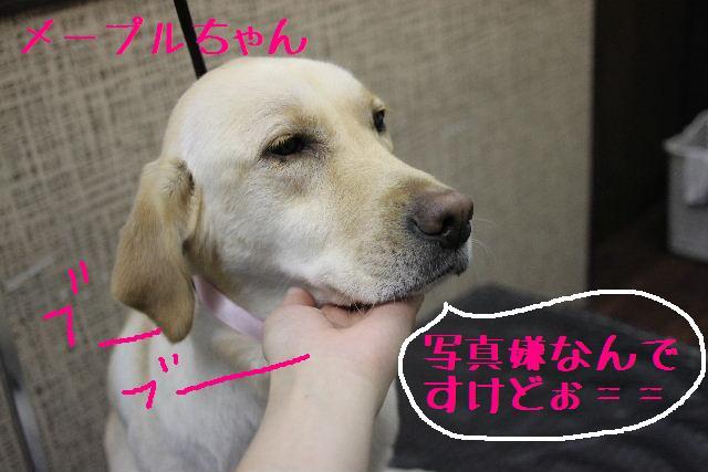 こんばんわぁ~~!!_b0130018_21235834.jpg