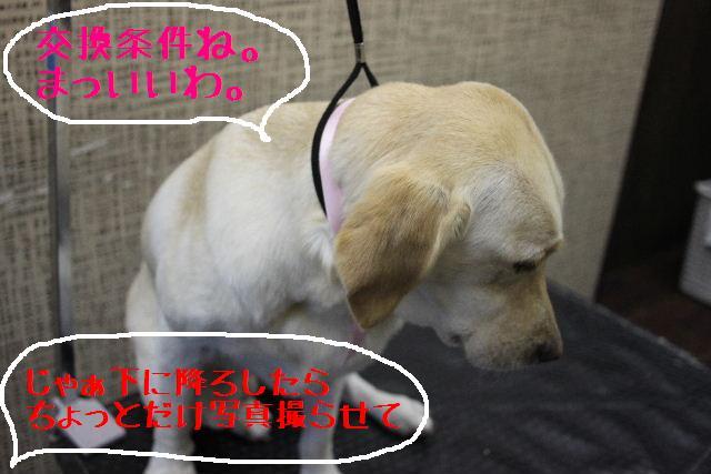 こんばんわぁ~~!!_b0130018_21245121.jpg