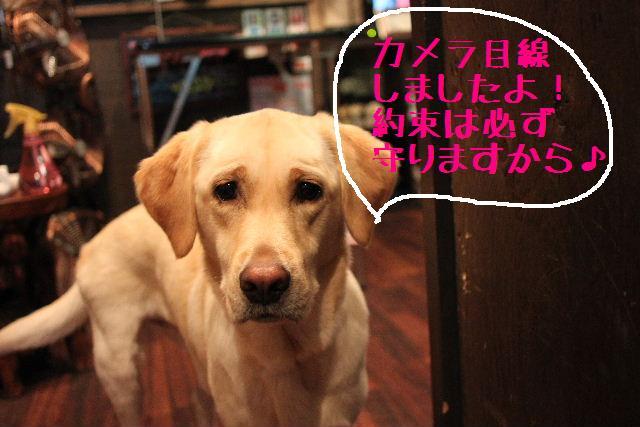 こんばんわぁ~~!!_b0130018_2124591.jpg