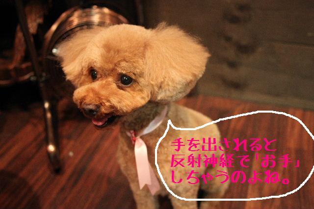 こんばんわぁ~~!!_b0130018_21265081.jpg
