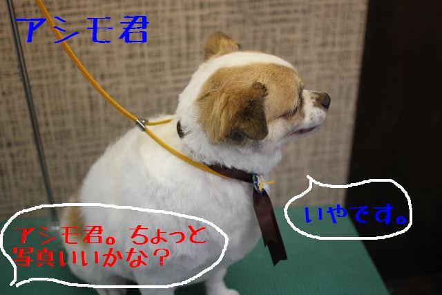 こんばんわぁ~~!!_b0130018_21282056.jpg