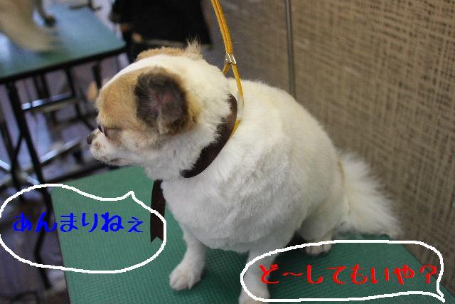こんばんわぁ~~!!_b0130018_21285868.jpg