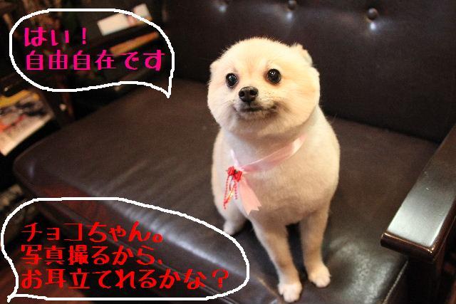 こんばんわぁ~~!!_b0130018_21311933.jpg