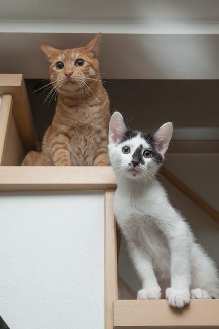 我が家の猫達_e0192921_2152398.jpg