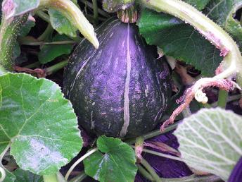 昨日の朝の収穫_a0139242_5232929.jpg