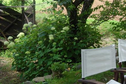 夏の風景_d0249047_1253974.jpg