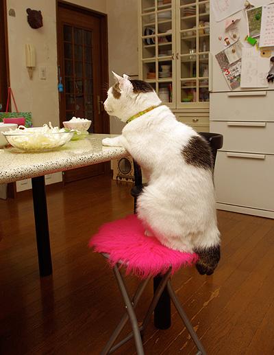 ヨウカンさん、普通に食卓につく。_a0028451_12552087.jpg