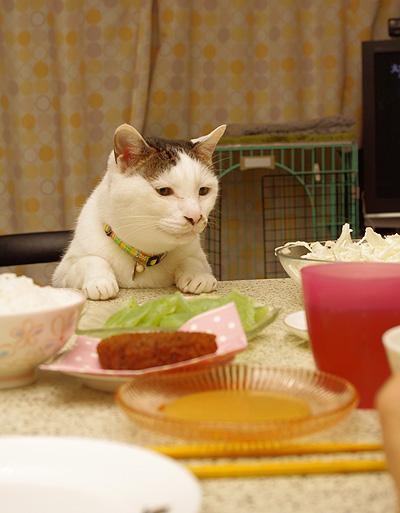 ヨウカンさん、普通に食卓につく。_a0028451_1256442.jpg