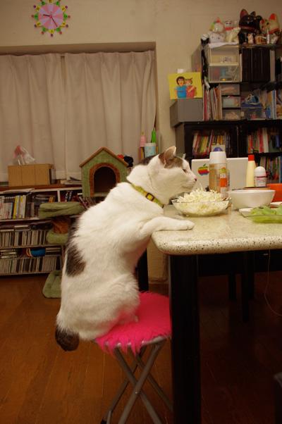 ヨウカンさん、普通に食卓につく。_a0028451_12574085.jpg