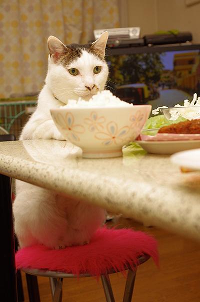 ヨウカンさん、普通に食卓につく。_a0028451_12582384.jpg