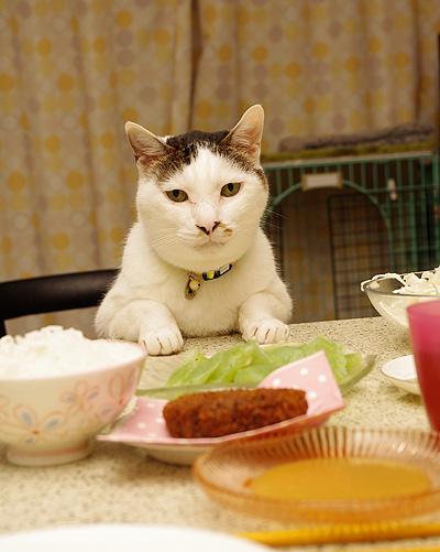ヨウカンさん、普通に食卓につく。_a0028451_12593383.jpg