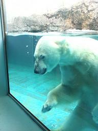 動物園。_b0072459_1731421.jpg