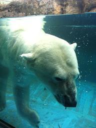 動物園。_b0072459_173341.jpg
