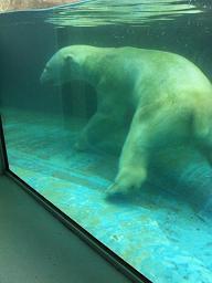 動物園。_b0072459_176081.jpg