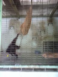 動物園。_b0072459_1761396.jpg