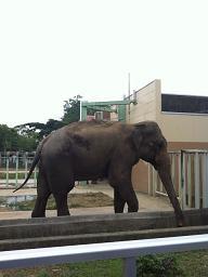 動物園。_b0072459_1762560.jpg