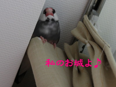 b0158061_2010532.jpg