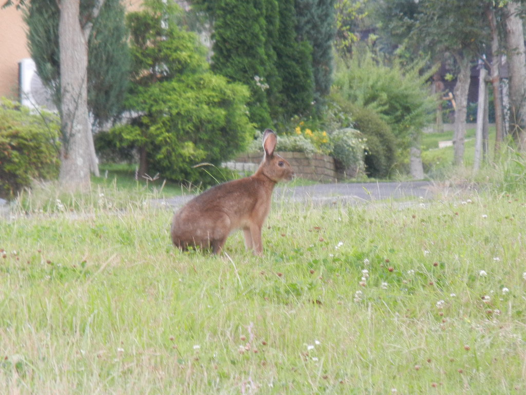 '12,7,5(木)大きなウサギ出現!_f0060461_8583647.jpg