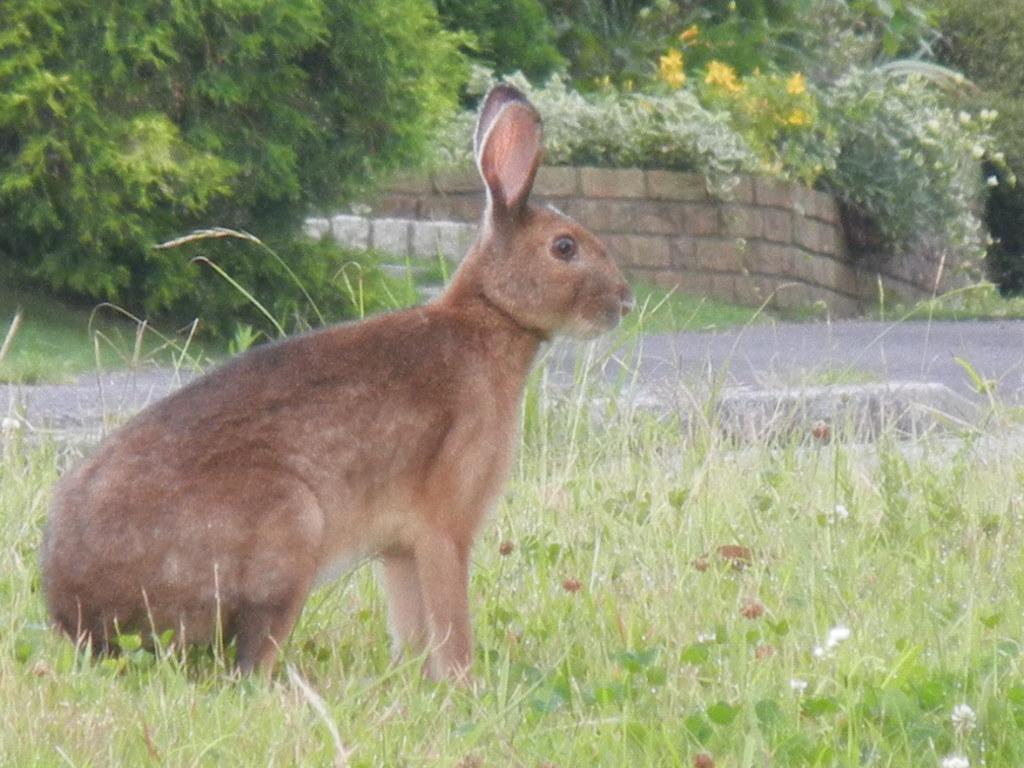 '12,7,5(木)大きなウサギ出現!_f0060461_90242.jpg