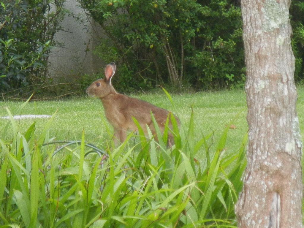 '12,7,5(木)大きなウサギ出現!_f0060461_913870.jpg
