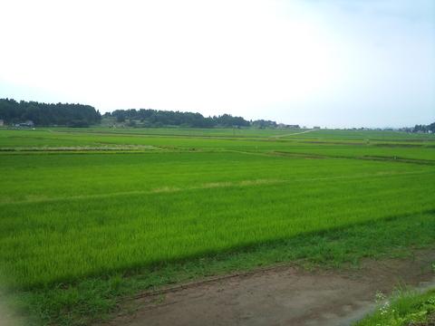 7月の田んぼとタケノコ汁。_d0182179_1971643.jpg