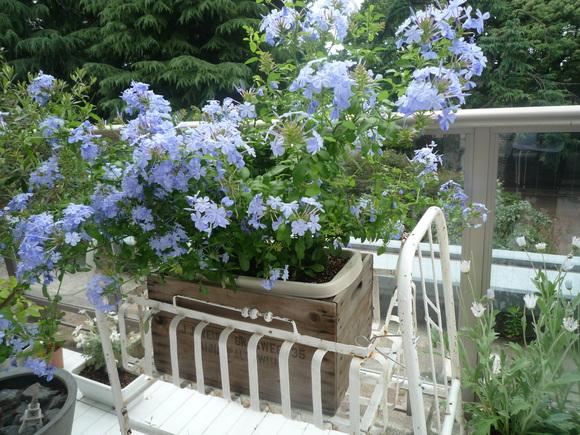 ベランダに花でも植えてみましょう。_d0266681_6412137.jpg