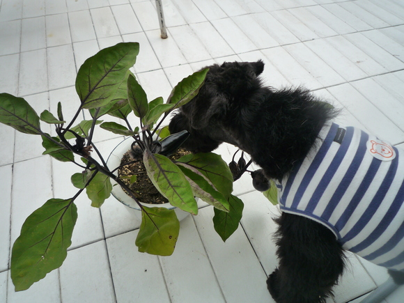 ベランダに花でも植えてみましょう。_d0266681_649121.jpg