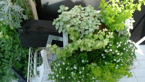 ベランダに花でも植えてみましょう。_d0266681_6515143.jpg