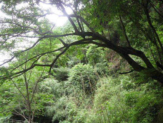 「森の中」へ~~☆_a0125419_16505736.jpg